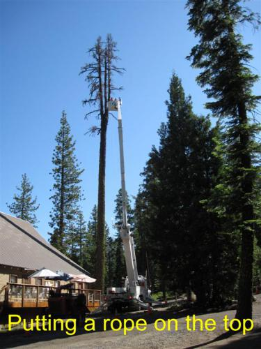 CHTreeRemoval 03