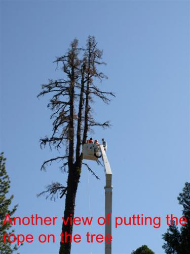 CHTreeRemoval 04