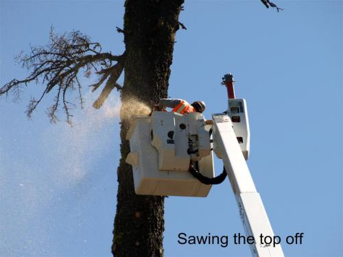 CHTreeRemoval 05