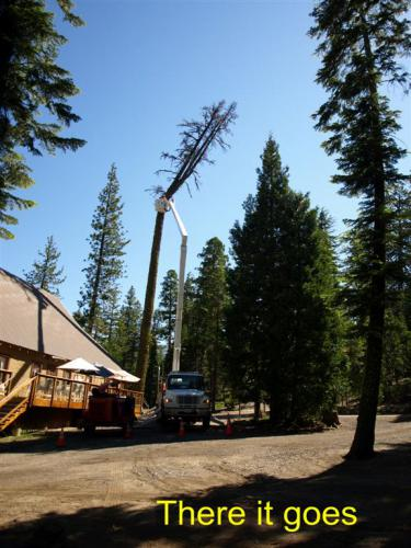 CHTreeRemoval 07